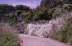 Great Gardens: Trematon Castle