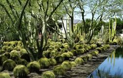 Amazing Great Gardens: Sunnylands