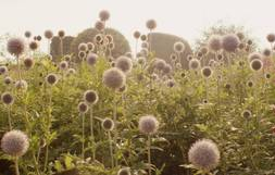 Great Gardens: Into The Wild